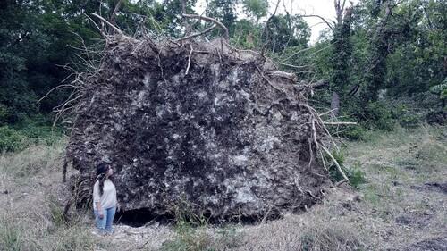 Vanina devant la souche d'un chêne de 600 ans