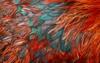 Feathers texture closeup 460633 3840x2400
