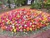 Fleur pour sa beaute visoflora 41318